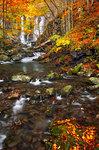 Autumn at Dardagna waterfalls, Corno alle Scale Regional Park, Lizzano in Belvedere, Bologna province, Emilia Romagna, Italy, Europe