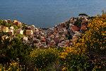 Spring day at Riomaggiore, Cinque Terre, municipality of Riomaggiore, La Spezia province, Liguria, Italy, Europe
