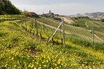 Langhe, Cuneo district, Piedmont, Italy. Langhe wine region spring,view on Serralunga d'Alba castle