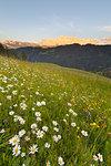 Longiarù, San Martino in Badia, Badia Valley, Dolomites, Bolzano province, South Tyrol, Italy. Meadows of Longiarù woth Sasso della Croce in the background.