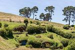 Hobbit houses on the hill. Hobbiton Movie Set, Matamata, Waikato region, North Island, New Zealand.