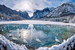 Dobbiaco/Toblach, province of Bolzano, South Tyrol, Italy. Winter at the Lake Dobbiaco with floating swans