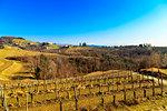 Abbazia di Rosazzo, Collio Friulano, Udine Province, Friuli Venezia-Giulia, Italy.