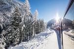 Bernina Express train passes through snowy woods, Preda Bergun, Albula Valley, Canton of Graubünden, Switzerland