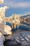 Isolated snow covered trees in Lake Sils, Plaun da Lej, Maloja Region, Canton of Graubunden, Engadin, Switzerland