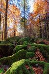 Moss on rocks in the forest of Bagni di Masino during autumn, Valmasino, Valtellina, Sondrio province, Lombardy, Italy