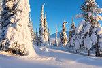 Sun on the snowy woods, Pallas-Yllastunturi National Park, Muonio, Lapland, Finland