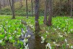 Akita Prefecture, Japan