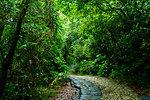 Forest in Sefautaki, Okinawa Prefecture, Japan