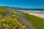 Beach and flora, Monterey Bay, Peninsula, Monterey, Pacific Ocean, California, United States of America, North America