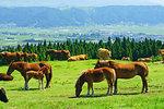 Ranch in Aso, Kumamoto Prefecture, Japan