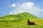 Horse in Aso, Kumamoto Prefecture, Japan