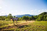 Horse in Hokkaido