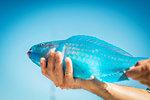 Male hand holding turquoise parrot fish, Islamorada, Florida, USA