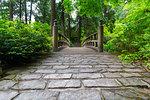 Cobblestone walking path to wooden Bridge at Japanese Garden in Spring Season