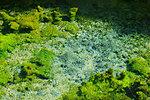 Source of Shirakawa River, Kumamoto Prefecture, Japan