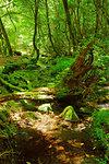 Source of Yamabuki, Kumamoto Prefecture, Japan