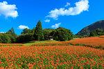 Yamagata Prefecture, Japan