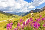 Flowers at Pordoi Pass Chapel, Pordoi Pass, Fassa Valley, Trentino, Dolomites, Italy, Europe