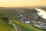 Vineyards and River Rhine at sunrise, Rudesheim, Rhineland-Palatinate, Germany, Europe