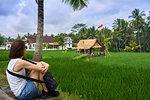 Looking over green rice fields on the Sari Organic Walk in Ubud, Bali, Indonesia, Southeast Asia, Asia