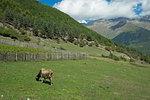 Views of the Caucasus mountain range from the town of Mestia in the Svaneti region, Georgia, Central Asia, Asia