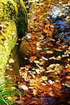 Kikuchi Gorge in Autumn, Kumamoto Prefecture, Japan