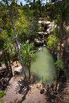 Oasis in Isalo National Park, Ihorombe Region, Southwest Madagascar, Africa