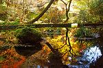 Source of Yamabuki in Autumn, Kumamoto Prefecture, Japan