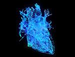 Illustration of a plexus heart.