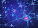 Nerve cells (neurons), illustration.