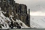 Bruennich's guillemots (uria lomvia) flying by coastal cliff,  Alkefjellet, Spitsbergen, Svalbard, Norway.
