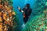 Female scuba diver looking at colourful coral at underwater canyon, Komodo Island, Nusa Tenggara Timur, Indonesia