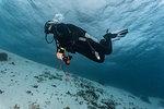 Female scuba diver descending into the ocean, Komodo Island, Nusa Tenggara Timur, Indonesia
