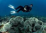 Underwater view of diver exploring the tropical waters, Raja Ampat, Sorong, Nusa Tenggara Barat, Indonesia