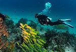 Underwater view of and a school of tropical yellow fish in Raja Ampat, Sorong, Nusa Tenggara Barat, Indonesia