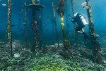 Underwater view of diver exploring a jetty in Raja Ampat, Sorong, Nusa Tenggara Barat, Indonesia