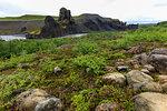 Field by basalt rock formations in Vatnajokull National Park, Iceland, Europe