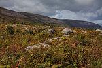 Slieve Elva, The Burren, County Clare, Munster, Republic of Ireland, Europe