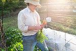 Mature female gardener with homegrown carrots in garden