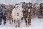 Horse Running in Snow Field