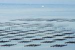Net for Seaweed in Ariake Sea, Kumamoto Prefecture, Japan