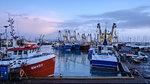 Trawlers moored alongside in the fishing port of Brixham, Devon, England, United Kingdom, Europe