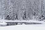 Frozen pond next to snowy forest