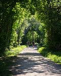 Men hiking on forest road
