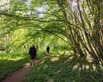 Men hiking through forest