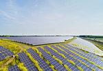 Solar panels surrounded by mustard plants at solar farm, Geldermalsen, Gelderland, Netherlands