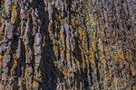 Detail of patterned rock formation, Stykkishólmur, Iceland