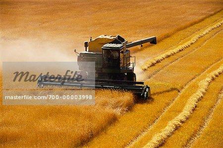 La récolte de blé près de Sainte-Agathe, Manitoba, Canada