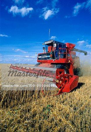 La récolte de blé près de Hamiota, Manitoba, Canada